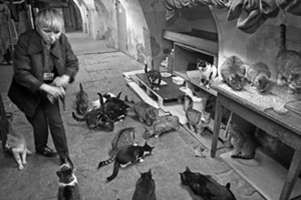 Коты Эрмитажа.