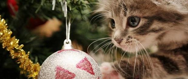 Что мы отмечаем 31 декабря?
